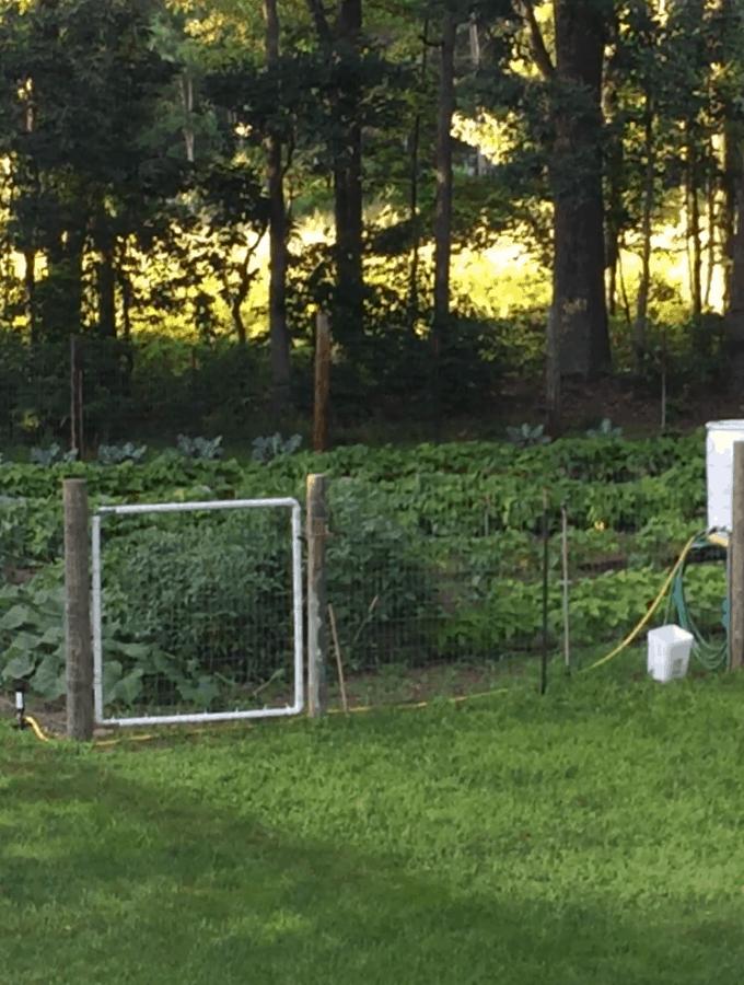 Garden July 15th
