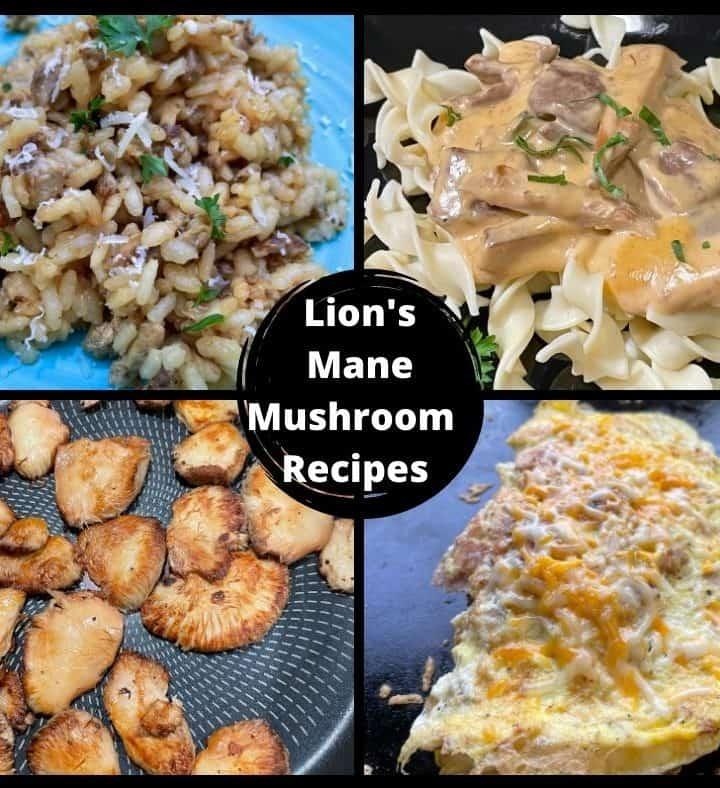 Lion's Mane Mushroom Recipes - Risotto, Omelette, Sautéed, and a Mushroom Cream Sauce.
